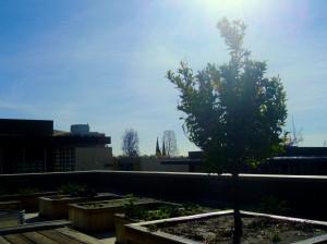 Sontag Hall Rooftop Garden