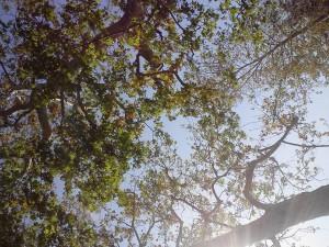 Sunshine! Trees! Yay!
