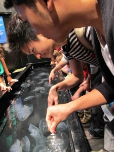 Providing free massages to the jellyfishes at Aquarium o the Pacific, Long Beach