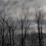 gray sky bare trees
