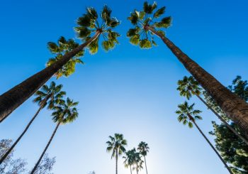 blue skies with palm trees