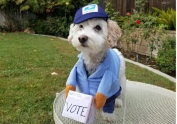 small white dog in costume with sign encouraging voting