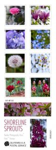 collection of photos of flowers in a vertical grid