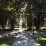 path through campus, covered by trees